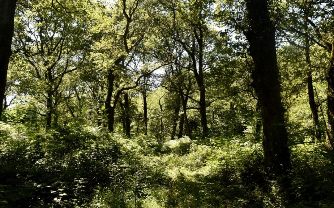 Bosque Viejo